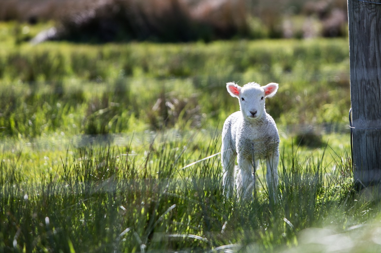 Growing permaculture pastures
